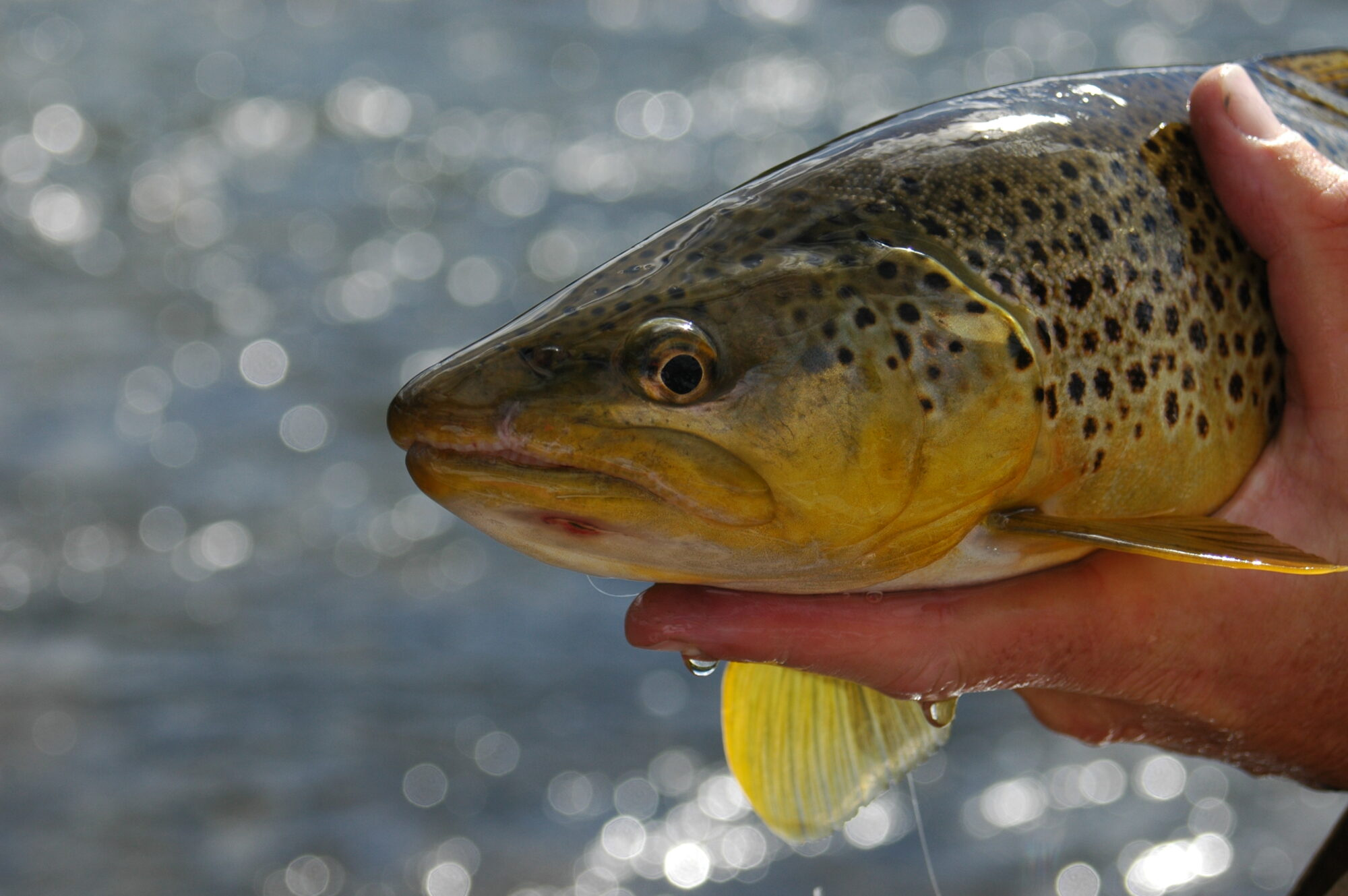 West Yellowstone Fly Fishing Guides | Lost Fork Outfitters